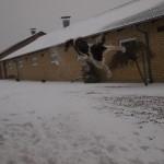 FT Spaniel springer efter snebolde og ligner noget, der kunne deltage i X-games (Skiløb og snowboarding)