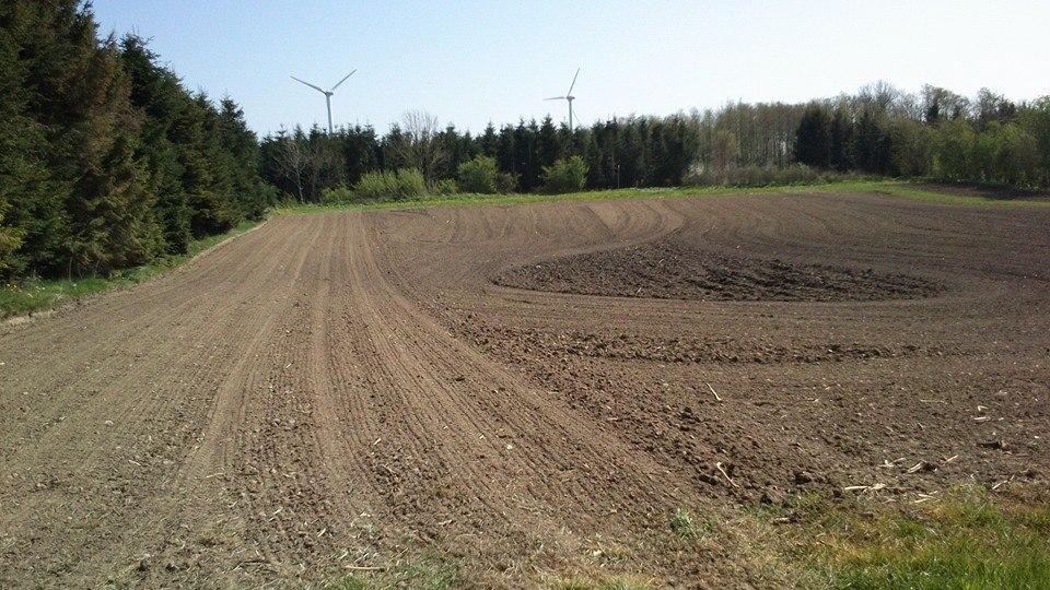 Nysået majs mark med græs udenom